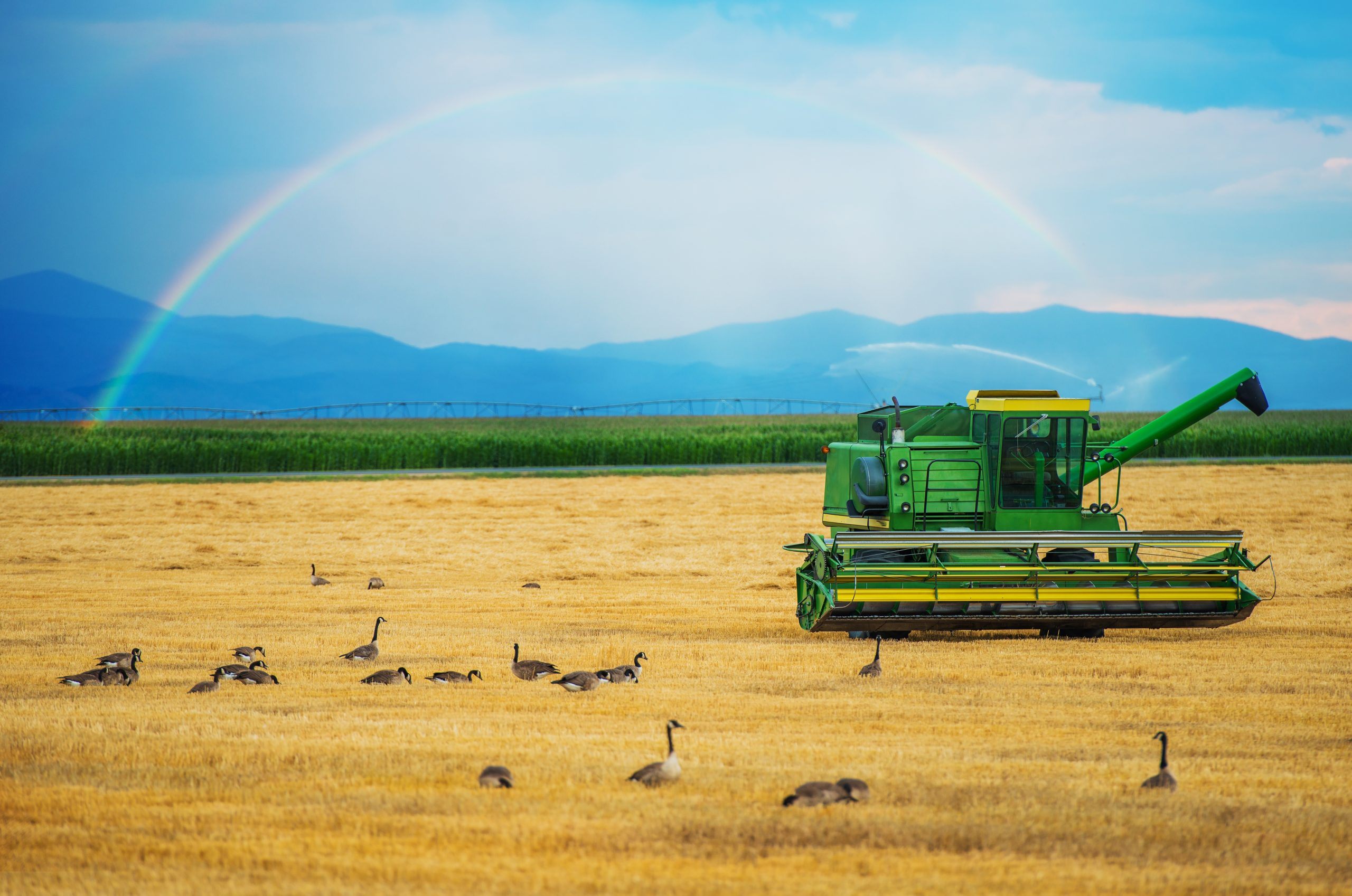 Colorado Harvesting. Modern Harvester and the Rainbow. Colorado, United States. Agriculture Theme.