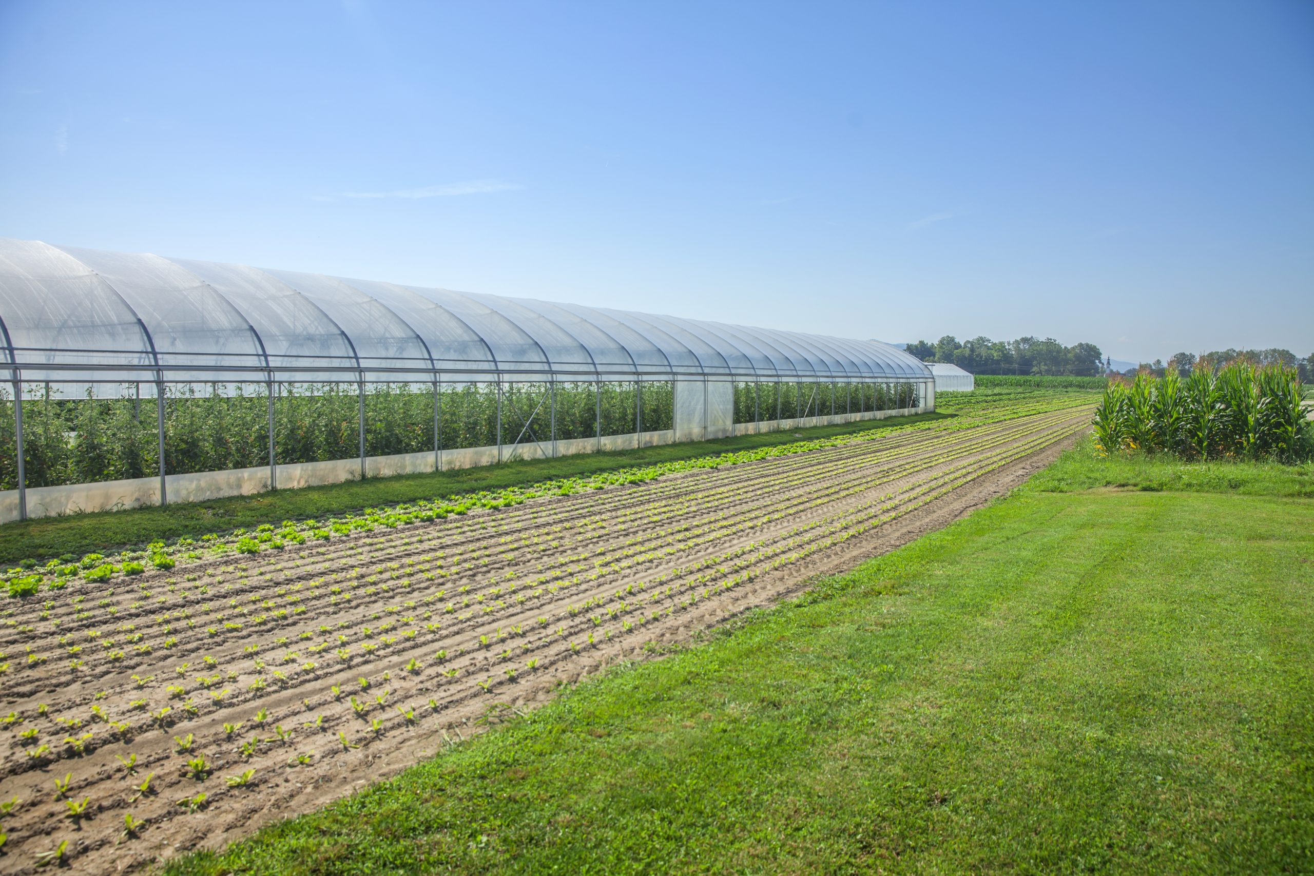 We can see fields and a greenhouse. It`s a beautiful summer day.
